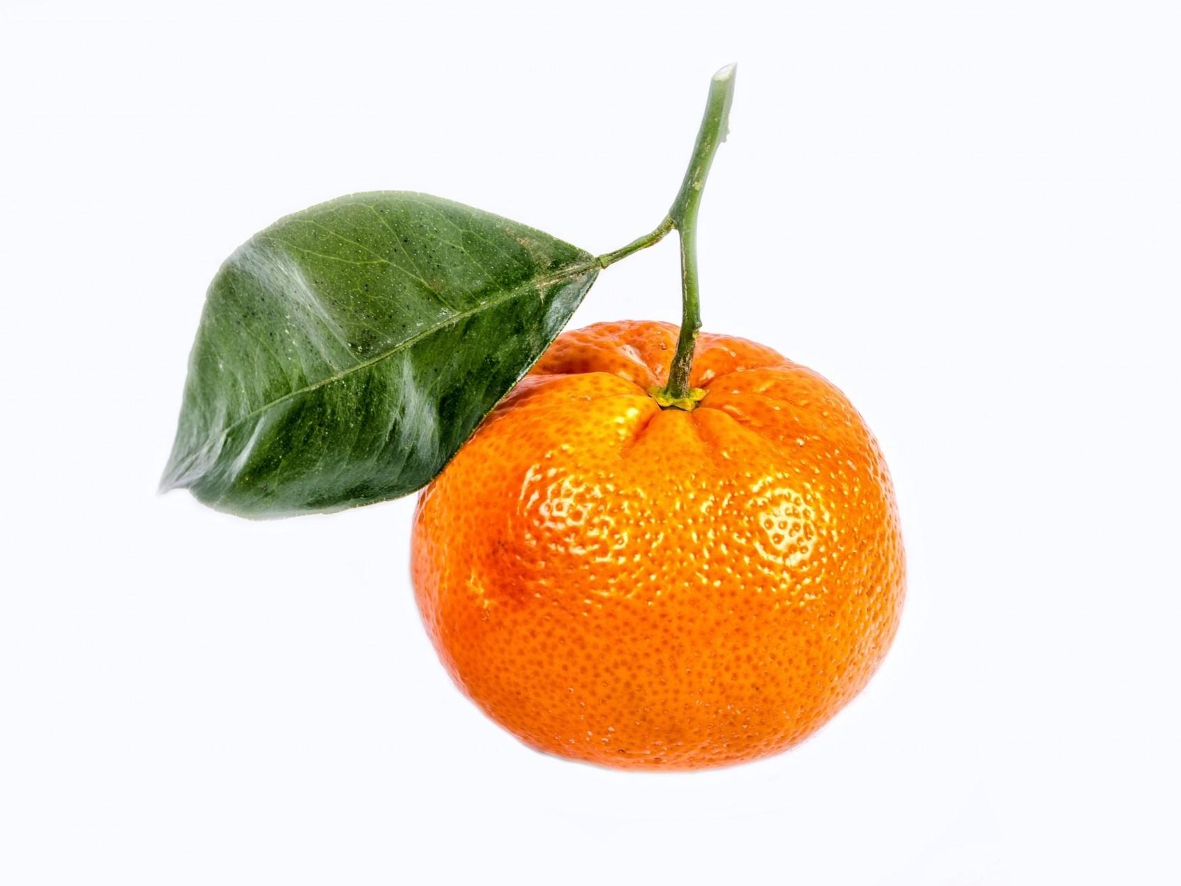 Citrus 400 x 300